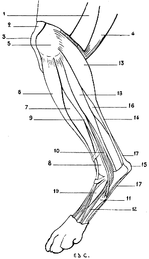 the project gutenberg ebook of the artistic anatomy of