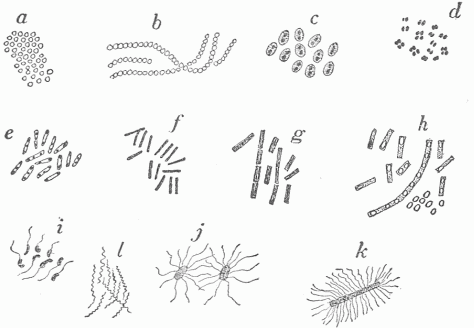 Structural Oraganization Of A Cell as well 23800 further Cholera likewise Morphology 20of 20bacterial 20cells also Fish Cell Diagram. on bacteria under microscope